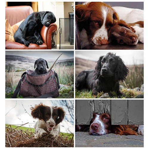 Country Matters Placemats Working Dogs